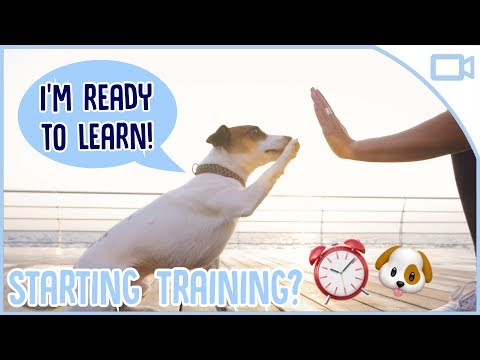 when-should-you-start-training-your-puppy?