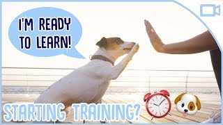 When Should You Start Training Your Puppy? - Should you start train...