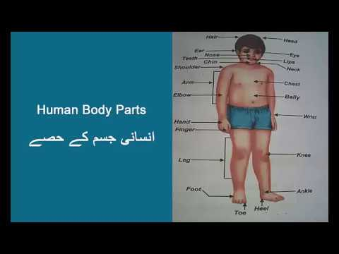 Human Body Parts with Scientist Barbie Teacher & Student Monster High Dolls Video