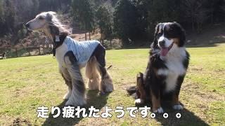 京都府民の森 日吉ドッグラン 2019年3月9日に行ってきました。 セントバ...
