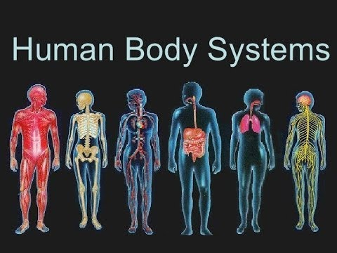 the human body a magnificent machine Free online course introduces you to how the human body works and how it is more than the sum of its parts.