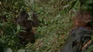 Gorillas In The Mist Trailer HD