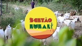 Capril Serecé e a produção de leite de cabra em Sertânia/PE
