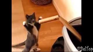 Мега смешные коты 2015