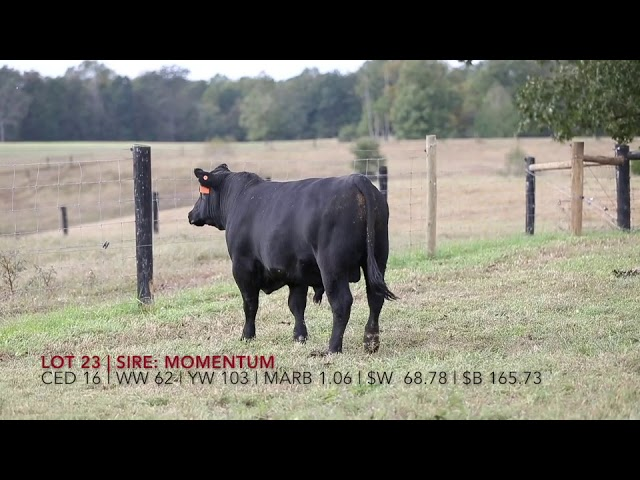 Edgewood Angus Lot 23