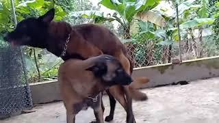 Big Dog meeting
