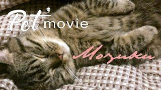 ペットムービー MOZUKU ver2 Pet'movie PV