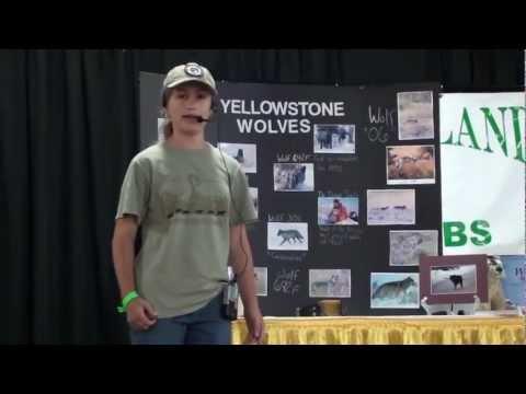 Alyssa's Big E presentation on Yellowstone Wolves