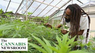 SAFE Banking Act Allows Cannabis, Jamaica Regulations Delay and Louisiana Advance MMJ Legislation