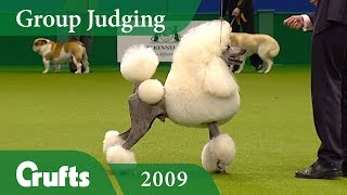 Standard Poodle wins Utility Group Judging at Crufts 2009 | Crufts Dog Show