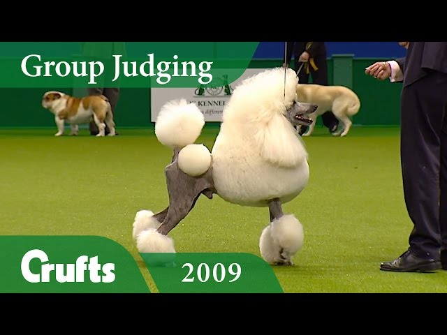 Standard Poodle wins Utility Group Judging at Crufts 2009 | Crufts Classics