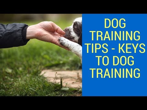 dog-training-tips---keys-to-dog-training