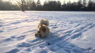 Cute puppy playing in the snow!