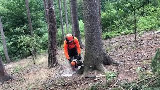 Těžba dřeva-likvidace kůrovce- ms 462