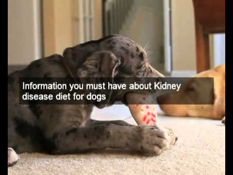 Great kidney disease diet for dogs cheap natural dog food recipes great kidney disease diet for dogs cheap natural dog food recipes for kidney disease diet for dogs youtube forumfinder Image collections
