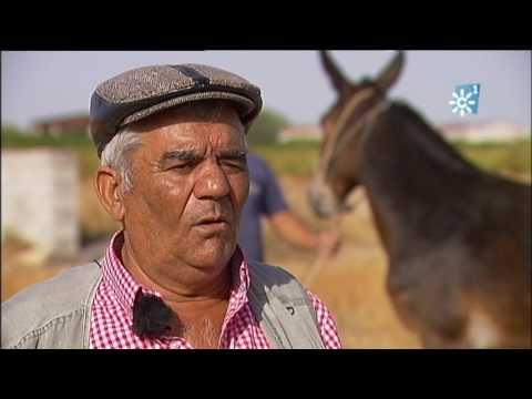 Tratantes de ganado gitanos. Un oficio que se acaba