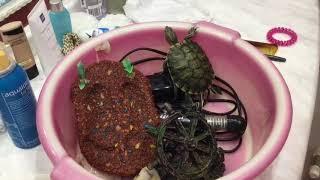 Уход за красноухими черепахами 🙈🙈🙈