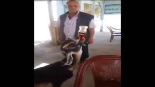 Goat visiting a restaurant and ask Coca-Cola Thumbnail