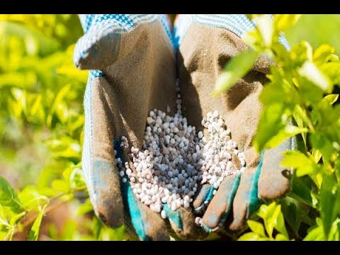 Fertilizer: Feeding the Worlds Hunger Fast - Classic Documentary