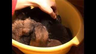 Как я спас щенят. фильм 1( несчастные)
