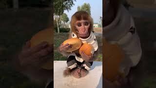 Cuties eating Bread😂🐒 Foodie lover❤️ Monkey Smile #short