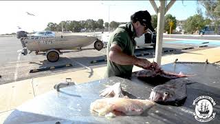Filleting Fish in Shark Bay