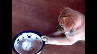 Pooka Doesn't Like Rice