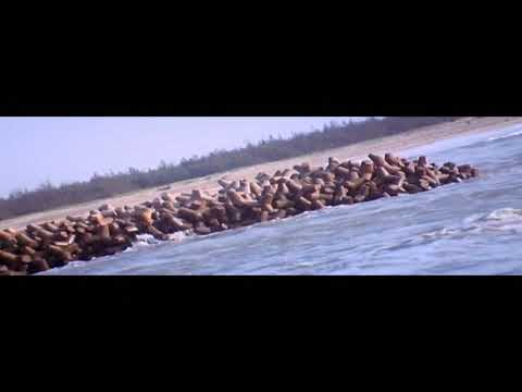 Evarinira preminchav full video song [ Varam movie 2004  ]