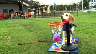 Rspca Queensland Animal Training Centre - Meet Our Demo Dogs!