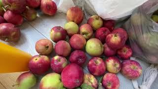 이쁜 사과에는 벌레가 왜?