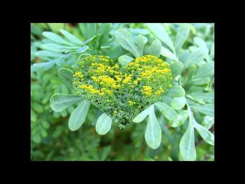 Комнатные и садовые цветы их описание, название, болезни и
