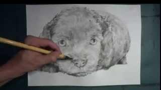 花鳥風月をメインとして、墨で一気に描く、約30分。 その即興の過程を「...