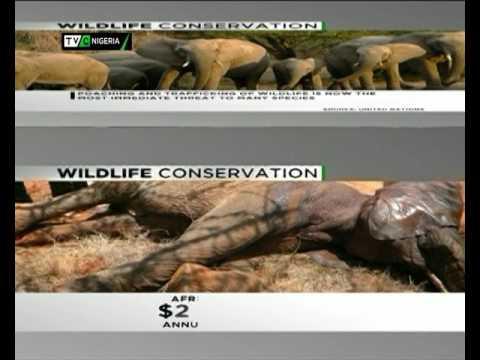 TVC Breakfast| World Wild Life Day 2| March 3, 2017