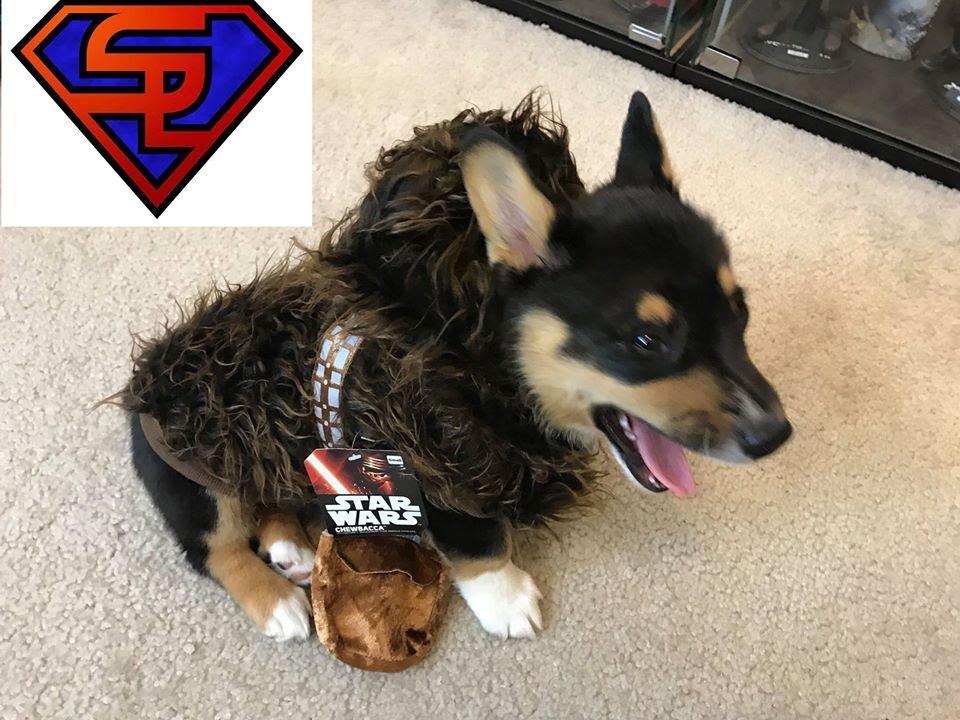 corgi puppy in chewbacca costume star wars rubies chewbacca pet halloween costume review