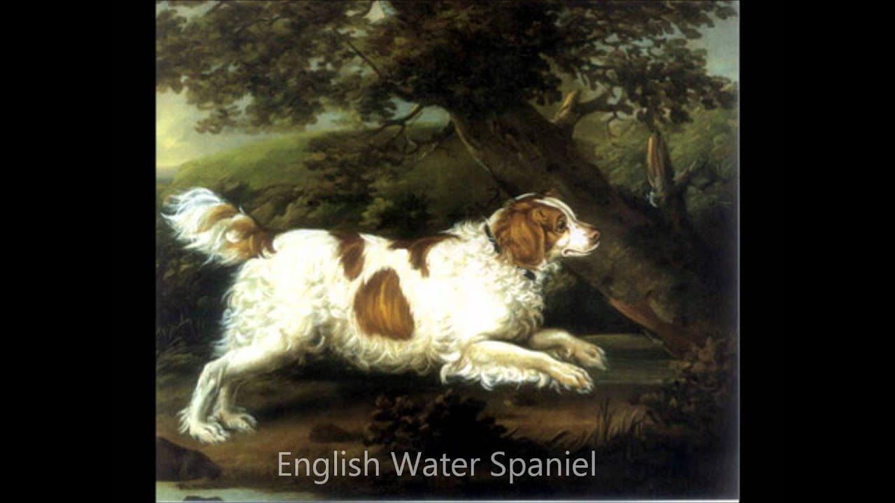 extinct dog breeds - YouTube