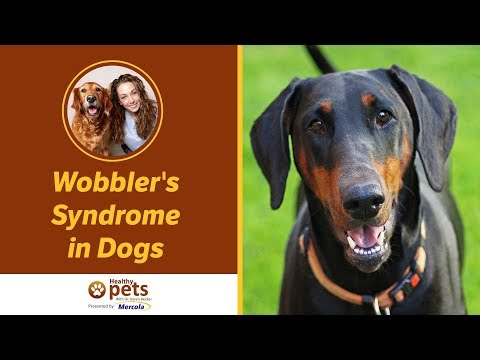 Large Dogs and Giant Breeds May Develop Wobbler's Syndrome