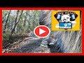Dog Wears Camera   Zarro Films The McDade Trai   Pet Camera