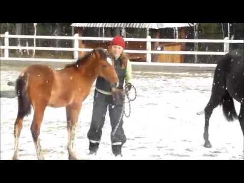 Лошадь - Кони - Обучение лошадей