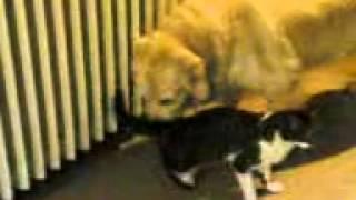 tecavuze ugrayan kedi