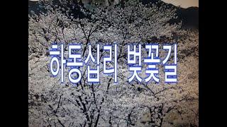하동십리 벚꽃길, 봄의 전령사 벚꽃소식, 벚꽃터널, 화…