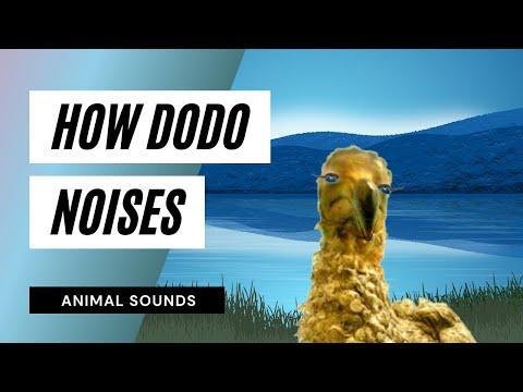 The Animal Sounds: Dodo Noises - Sound Effect - Animation