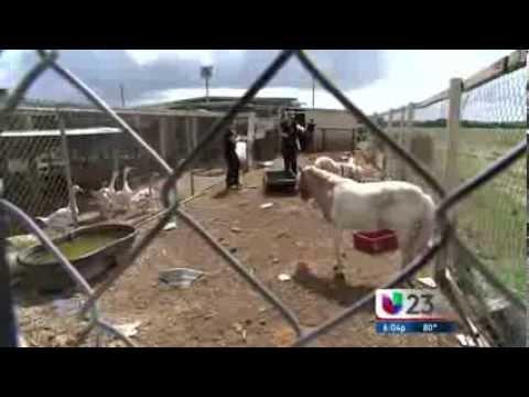 Univision.......Proenza Farms Raid
