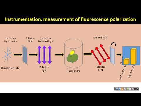 An Introduction to Echo Liquid Handler and Fluorescence Polarization as a Tool for Drug Screening