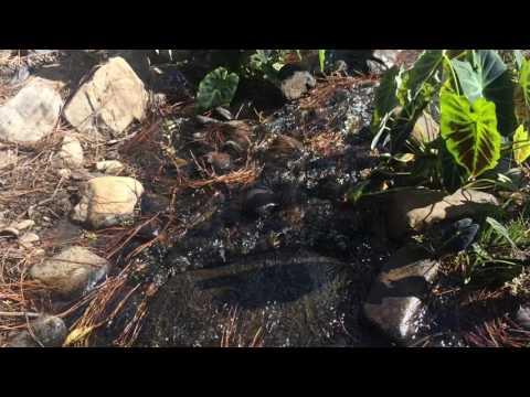 Creek At Callaway Gardens, GA