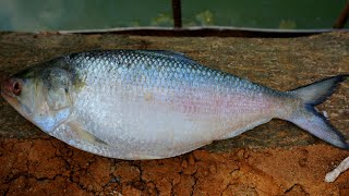 Padmar DOI SORSHE ILISH Bangali Favorite Traditional Hilsha Fish Recipe Cooking by Grandmother
