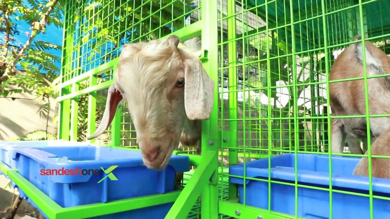 Sandesh one goat farming 0471 2431118 youtube