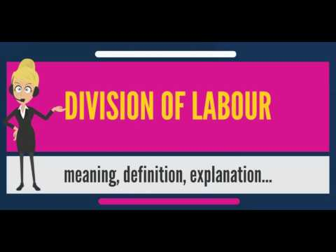 another word for division of labor