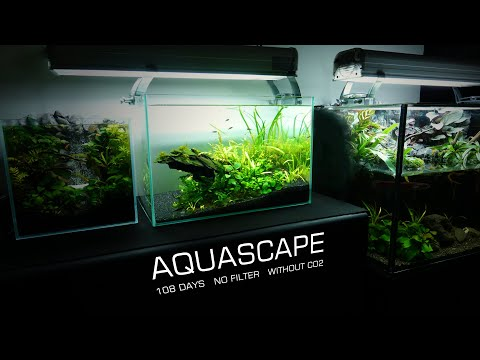 making-low-tech-without-co2-planted-aquarium-easy-do-aquascape-no-filter