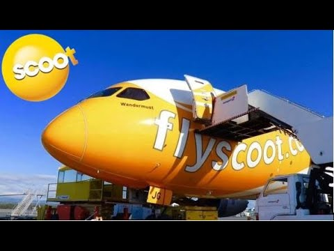 TRIP REPORT | Scoot | BUSINESS CLASS | Boeing 787-9 | Gold Coast - Singapore