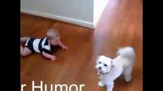 Очень смешное видео! Дети и животные. Funny kids 2014